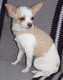 Extra Small Crochet Dog Sweater Pattern